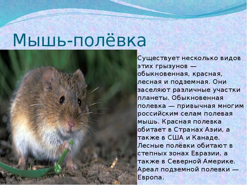 Виды летучих мышей: вампир, белая, фруктовая, свиноносая, бульдоговая и другие