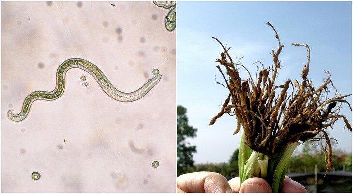 Вредители сельскохозяйственных культур, насекомые вредители культурных растений