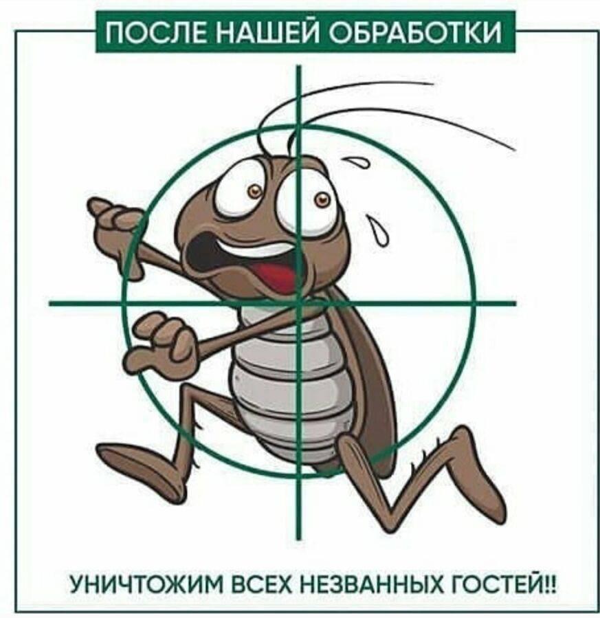 Тараканы и клопы
