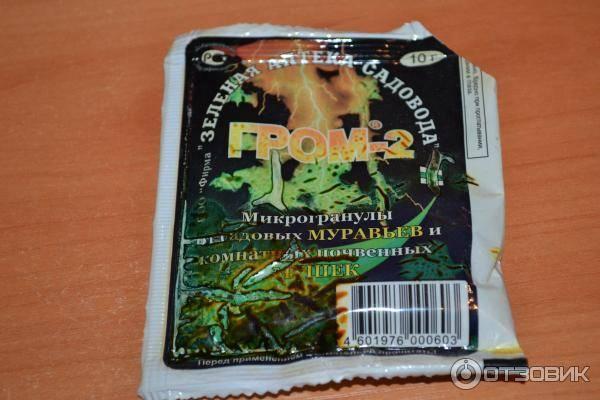 Гром-2 - все о комнатных растениях на flowersweb.info