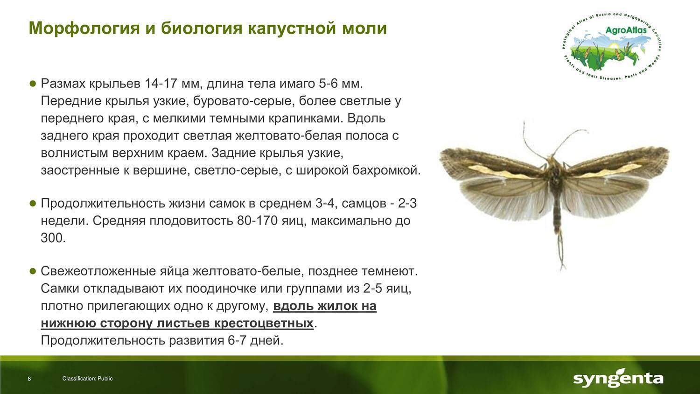 Фото моли, отличительные характеристики видов и особенности биологии