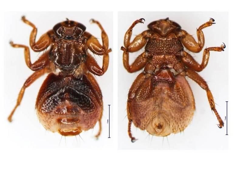 Лосиная вошь, или муха: чем опасна, способы борьбы. нападение лосиного клеща на человека: в чём опасность лосиная муха в квартире откуда и как