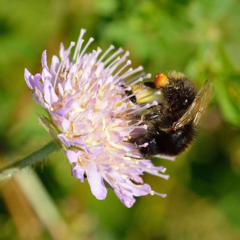 Самые интересные факты о пчёлах, осах и шмелях   vivareit