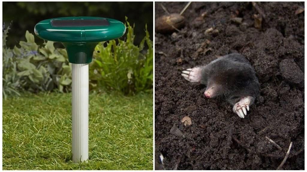 Способы избавления от мышей на даче раз и навсегда