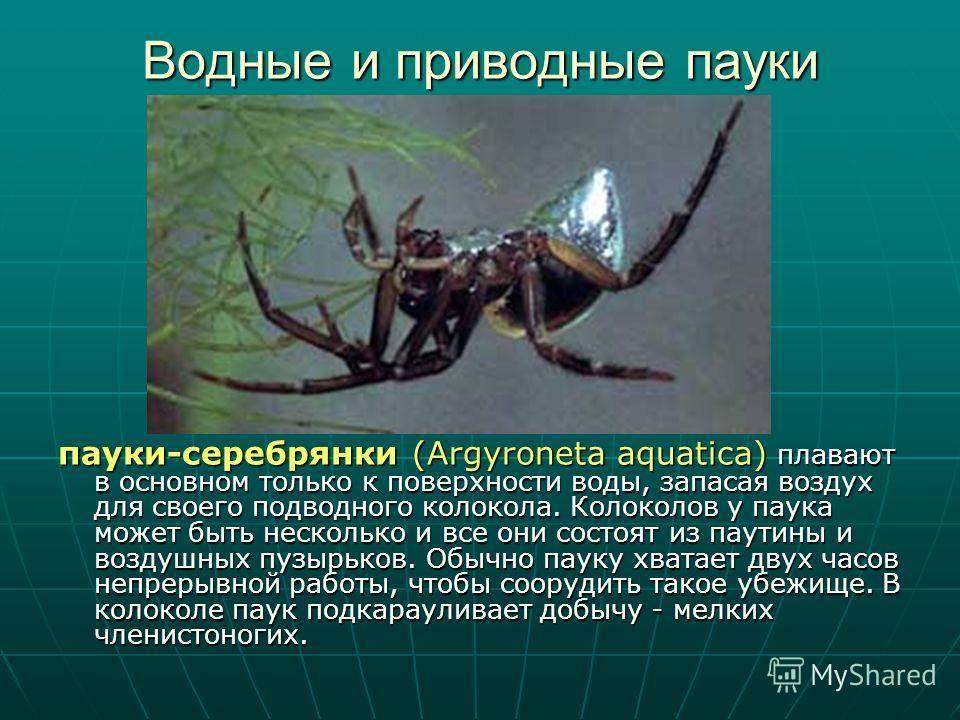 Классификация паукообразных. значение в природе и жизни человека паукообразных