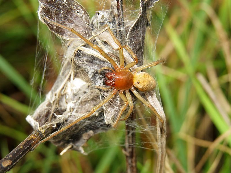 Укусил паук — что делать до приезда «скорой помощи»
