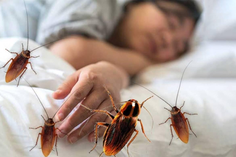 Кусаются ли тараканы и насколько сильно они вредят человеку.