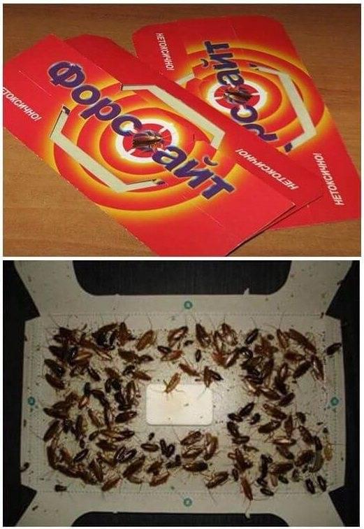Ловушка от тараканов форсайт: отзывы, инструкция, описание