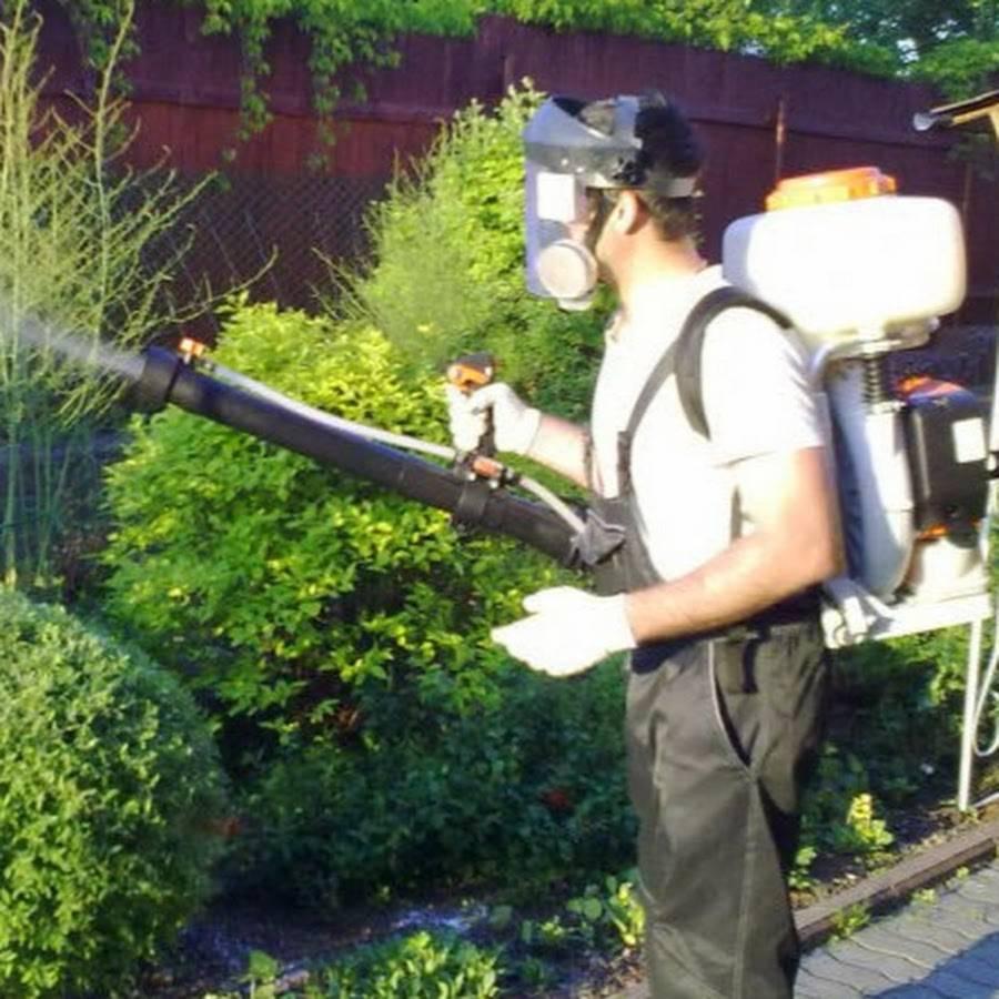 Как избавиться от комаров на дачном участке