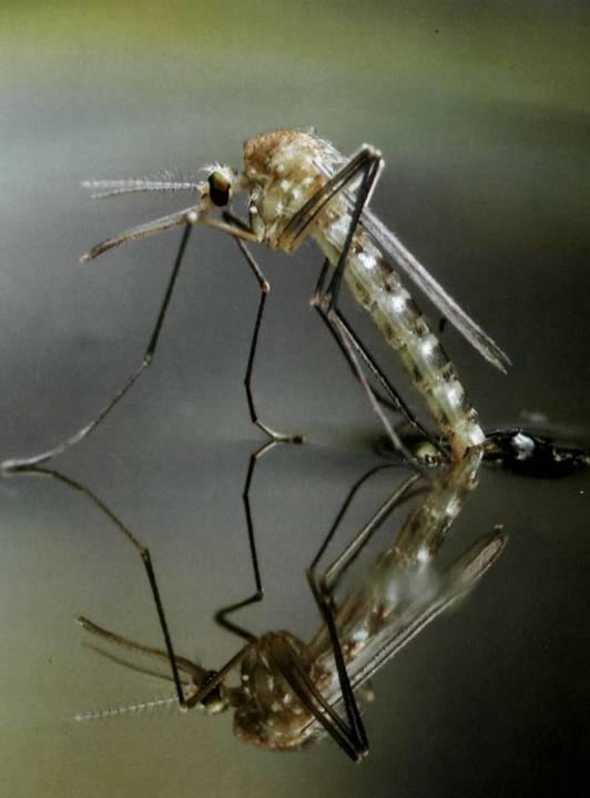 Почему остаются синяки после укусов комаров