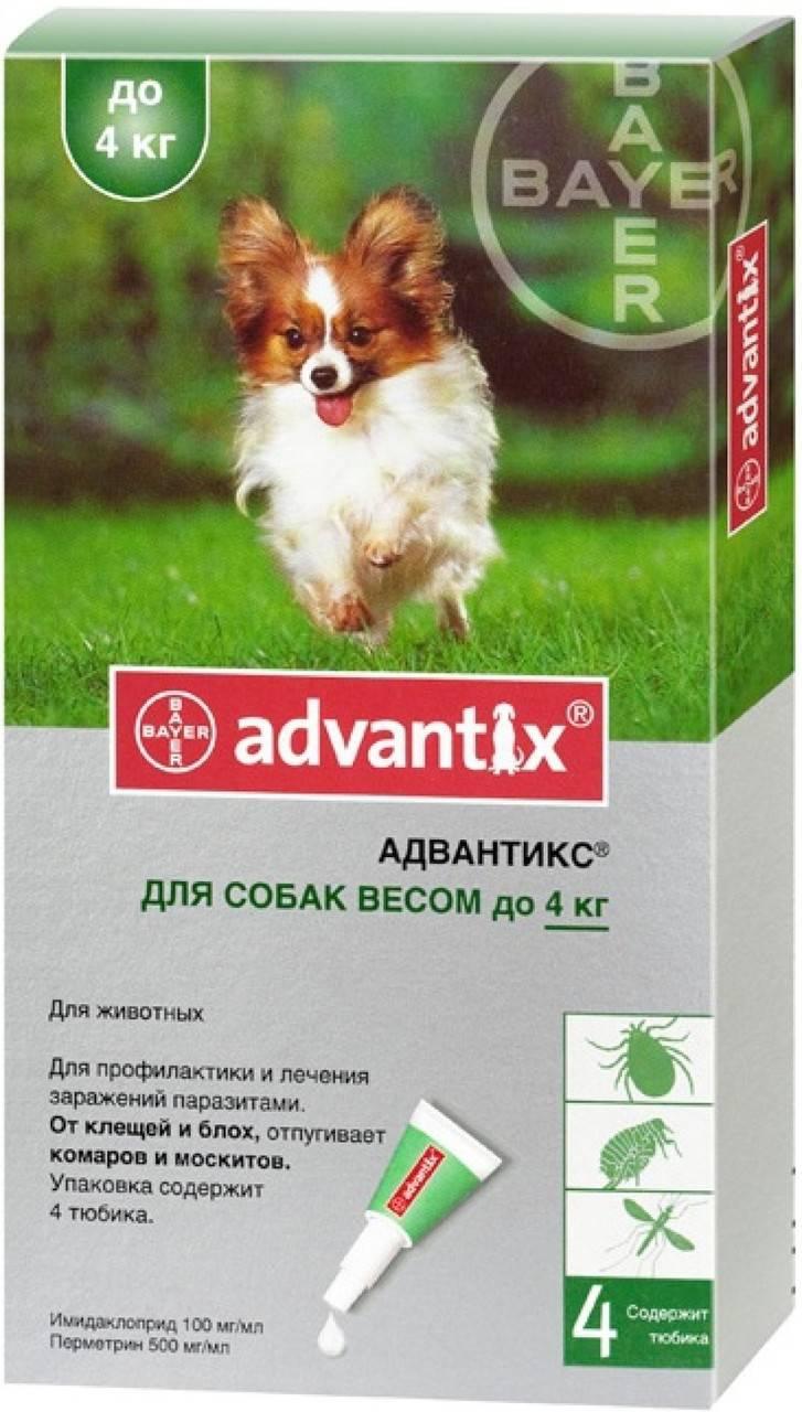 Чтобы не мучали паразиты – капли адвантикс для собак  