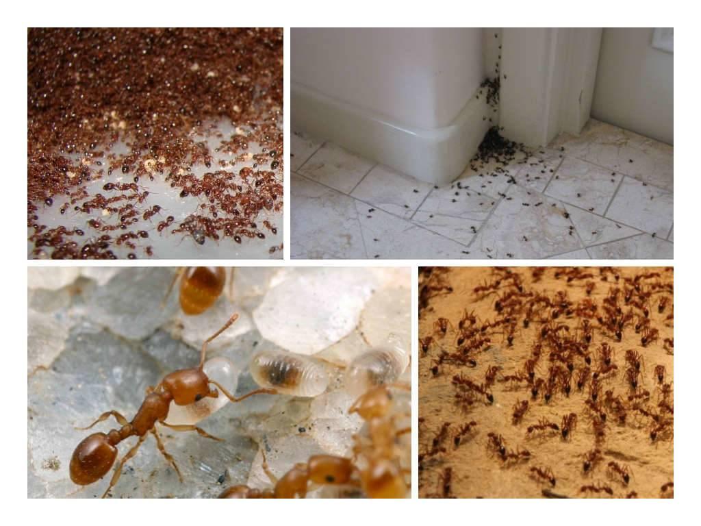 Народные средства от муравьев в доме: 17 способов избавления