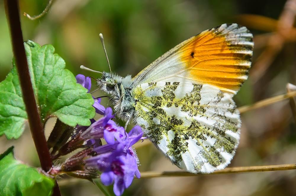 Основные виды дневных бабочек в россии: список, фото, названия, описание и видео  - «как и почему»