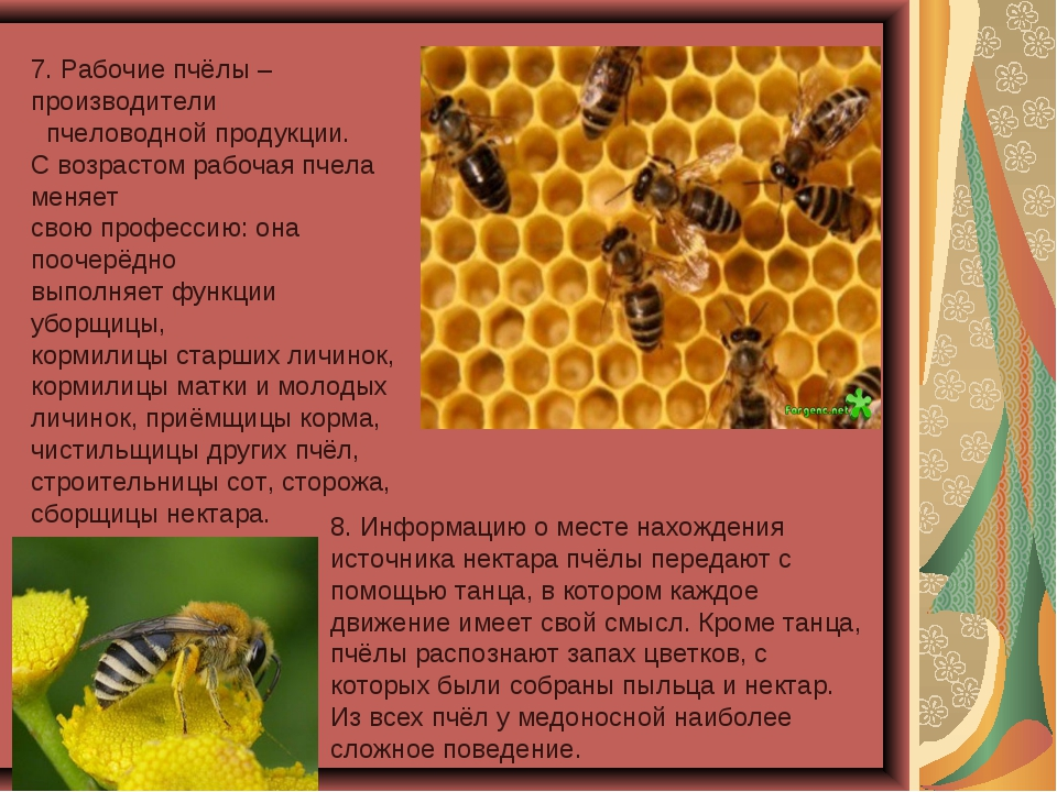 Психология пчелиной семьи и 10 удивительных фактов о пчелах, которых многие не знали