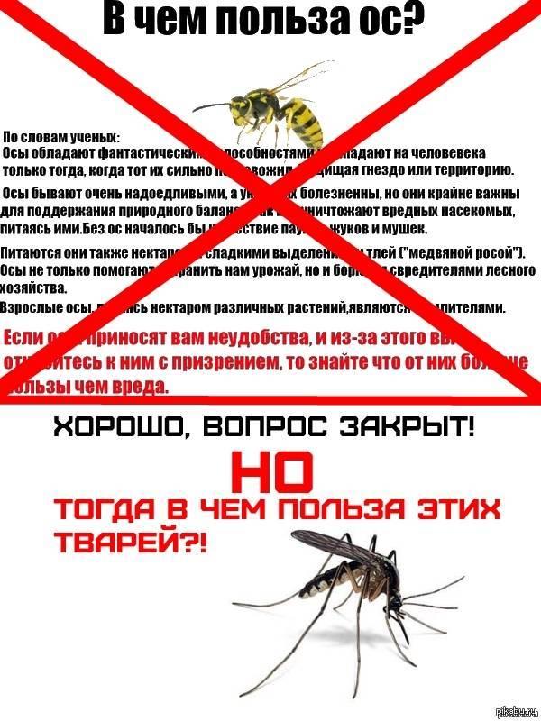 Чем полезен укус осы для человека