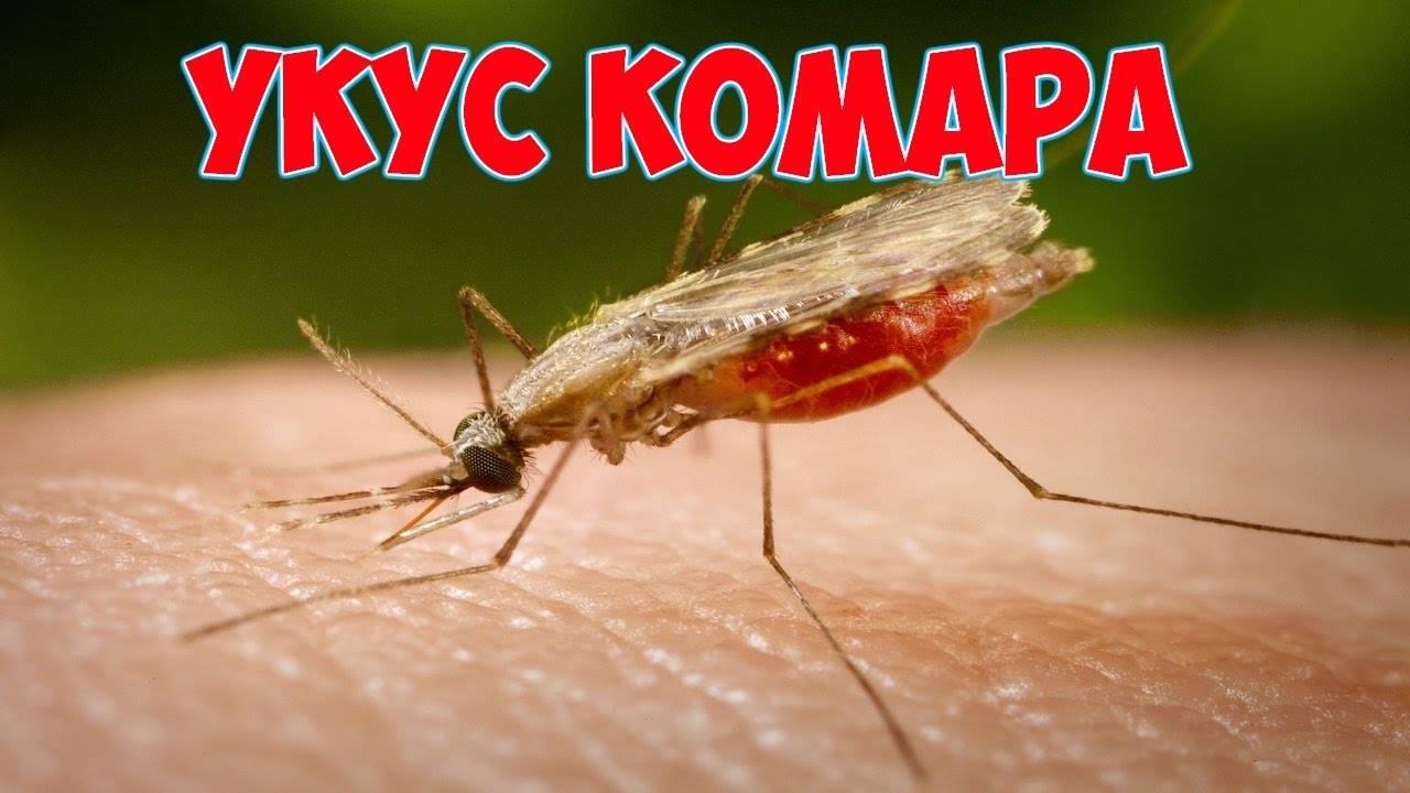 Малярийный комар: как выглядит, чем опасен укус