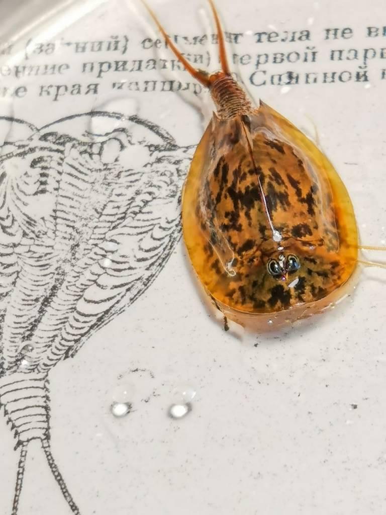 Аквариумный мох (24 фото): правила содержания мхов в аквариуме, феникс, рождественский и другие виды мхов с названиями и описанием