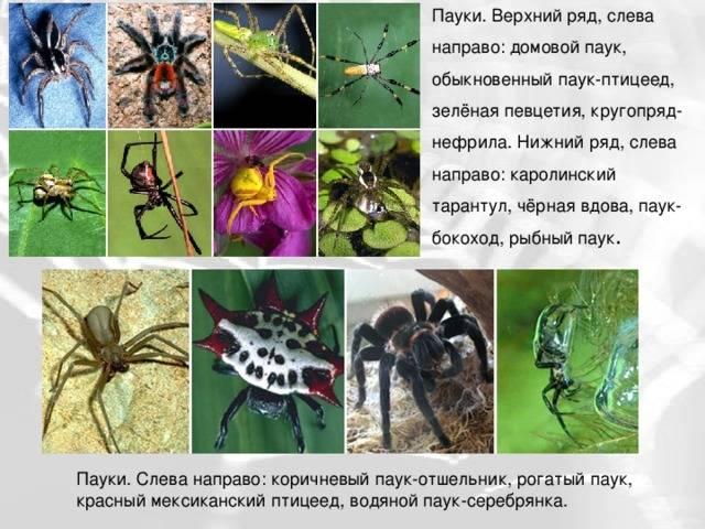 Какую роль играют животные в природе и жизни человека