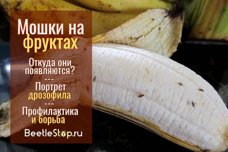 Интересный вопрос: откуда берутся мошки на фруктах