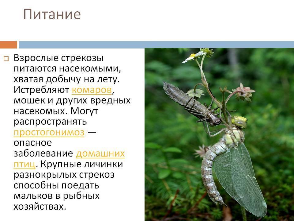 Кто ест тараканов? полный обзор природных врагов тараканов