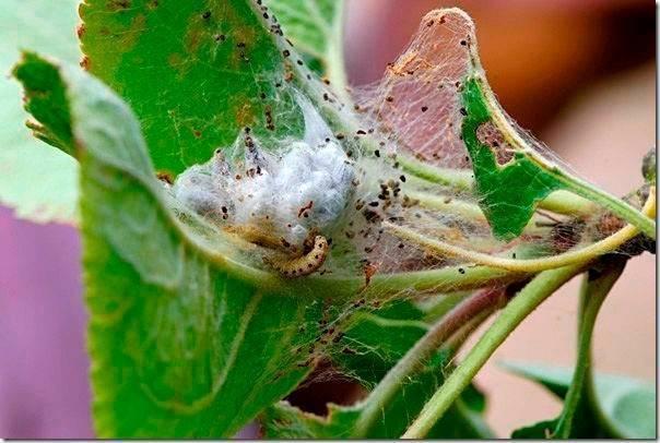 Паутинный клещ на огурцах в теплице и в открытом грунте. как бороться и методы лечения