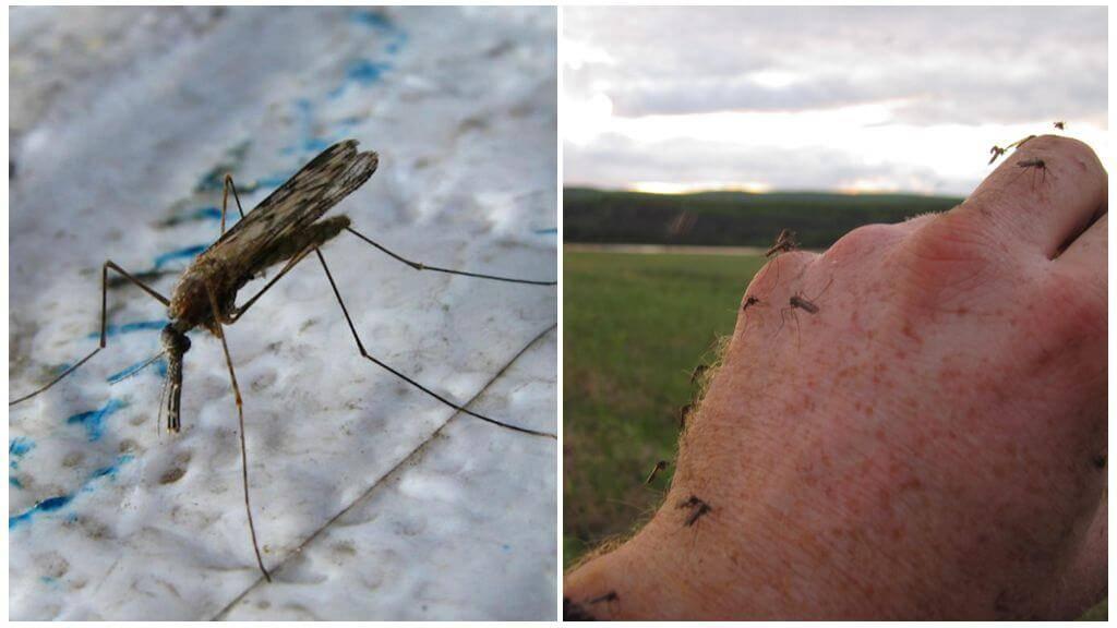 На что летят комары и как они находят человека