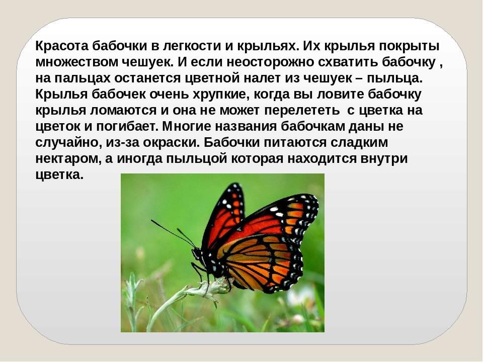 А вы знали, что бабочки помогают человеку сохранять психическое здоровье? что еще умеют дивные насекомые?