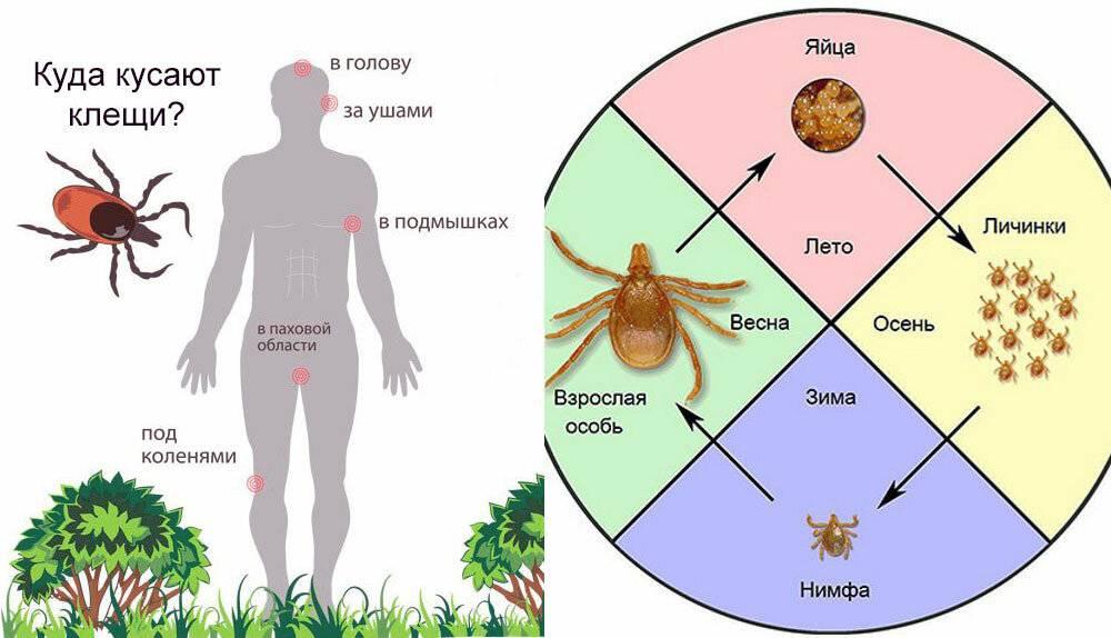 При какой температуре погибает паутинный клещ