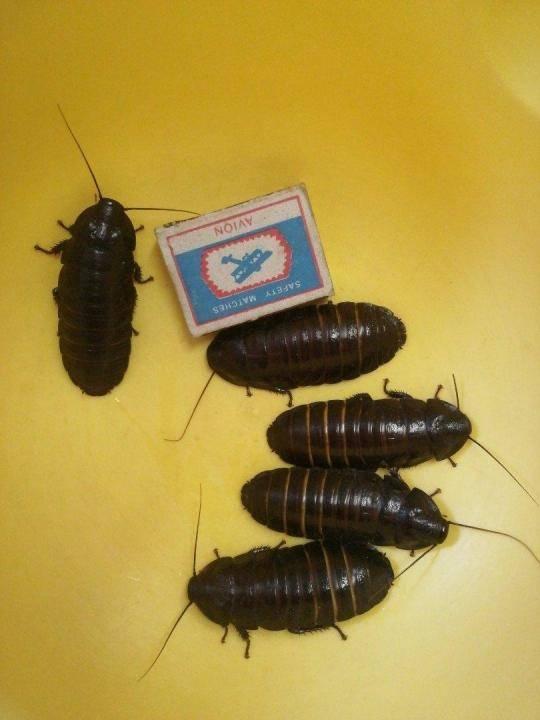 Тараканы - как от них избавиться? где обитают тараканы? фото + видео инструкция!