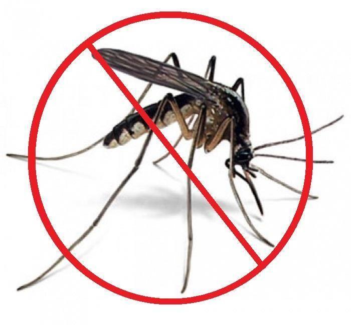 Чем питается комар? обзор предпочтений насекомого в зависимости от пола и стадии развития. для чего в природе нужны комары