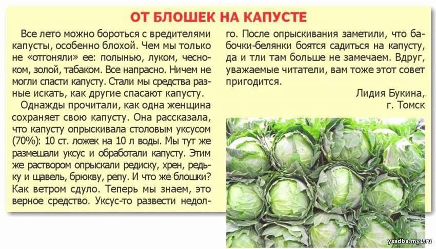 ᐉ как бороться с личинкой майского жука, борьба с хрущем - zoo-mamontenok.ru