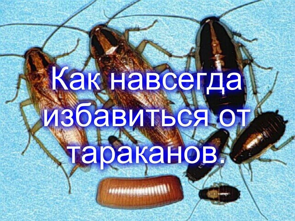 Как вывести тараканов из квартиры в домашних условиях: лучшие способы