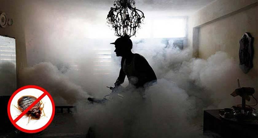 ❶ холодный туман от клопов: помогает ли обработка холодным туманом в уничтожении клопов, какова цена услуги и отзывы