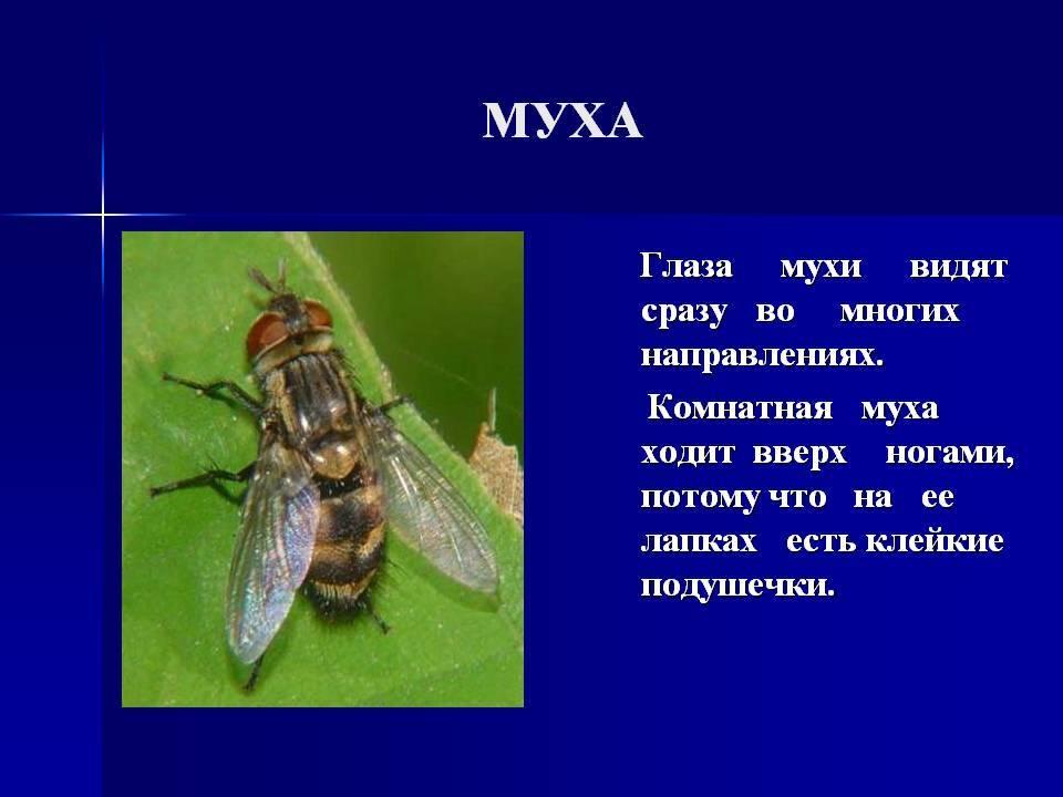Что происходит с вашей едой, когда на неё садится муха? :: инфониак