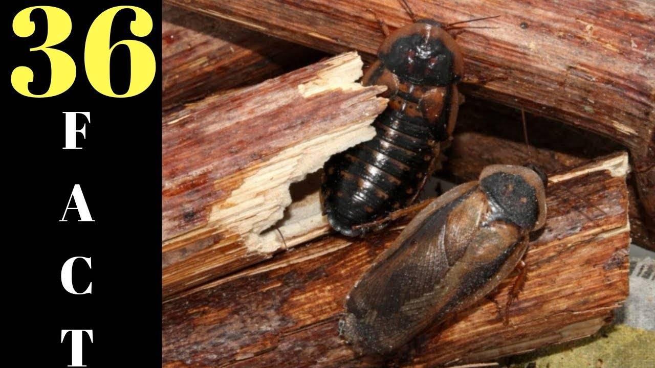 Циперметрин от тараканов: описание, инструкция по применению и отзывы