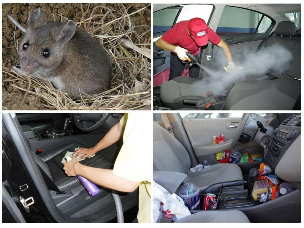Как вывести мышь из машины: инструкция и советы 2021