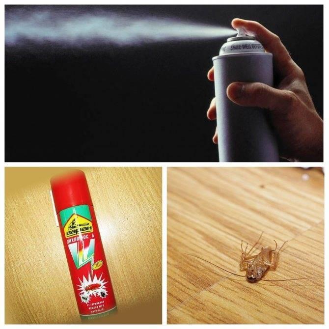 Методы борьбы с блохами в квартире: готовые и народные средства