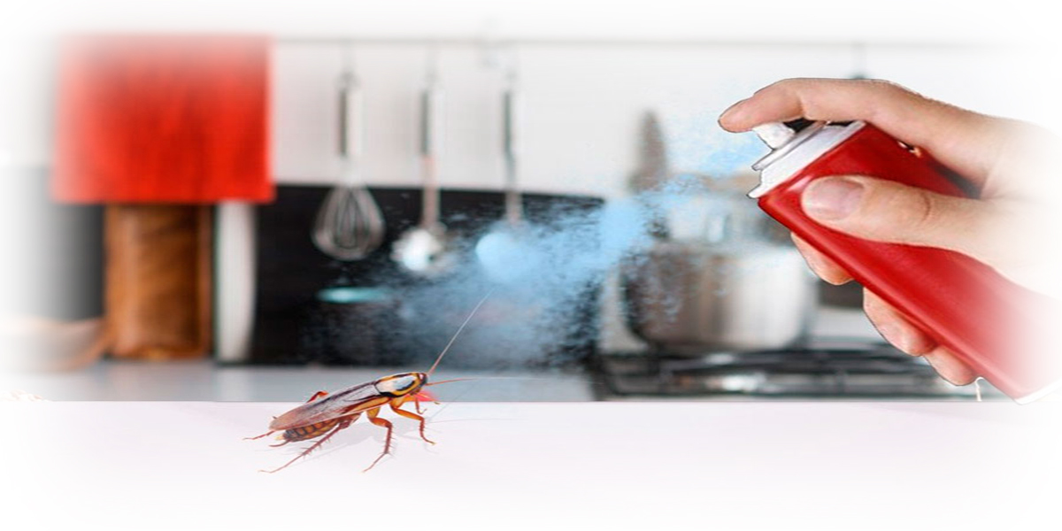 Чем травить тараканов в квартире самостоятельно