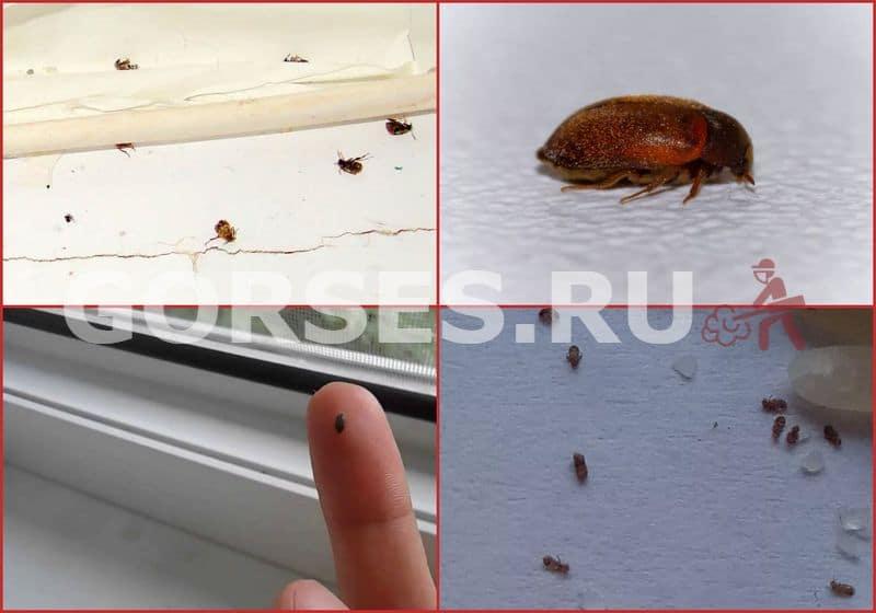Маленькое коричневое насекомое в квартире на кухне: способы борьбы