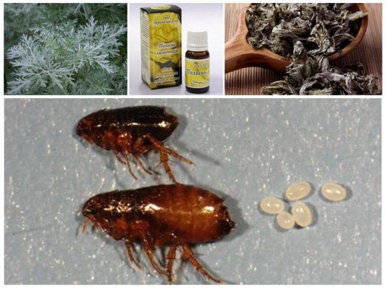 Народные средства от блох у животных: рецепты приготовления, как применять, использование полыни