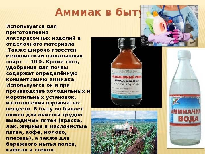 Нашатырный спирт от тараканов: как разводить, рецепты