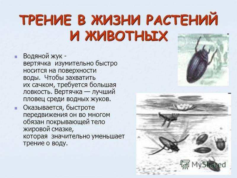 Жук плавунец — интересные факты о насекомом