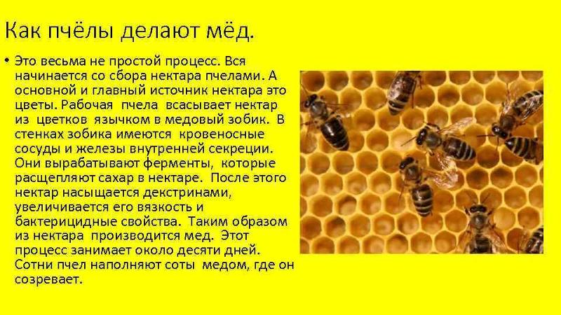 Делают ли осы мед?