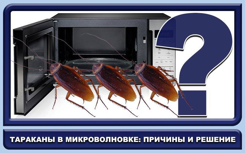 Как быстро и навсегда избавиться от тараканов в микроволновке
