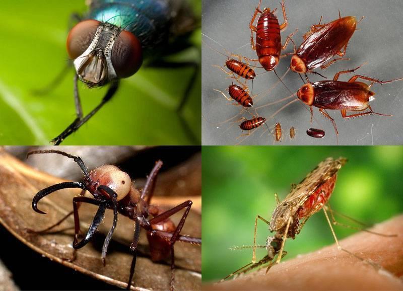 Dr klaus от муравьев и клещей - инструкция по применению