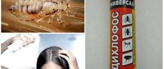 Можно ли избавиться от вшей с помощью красок для волос? - cosmetism