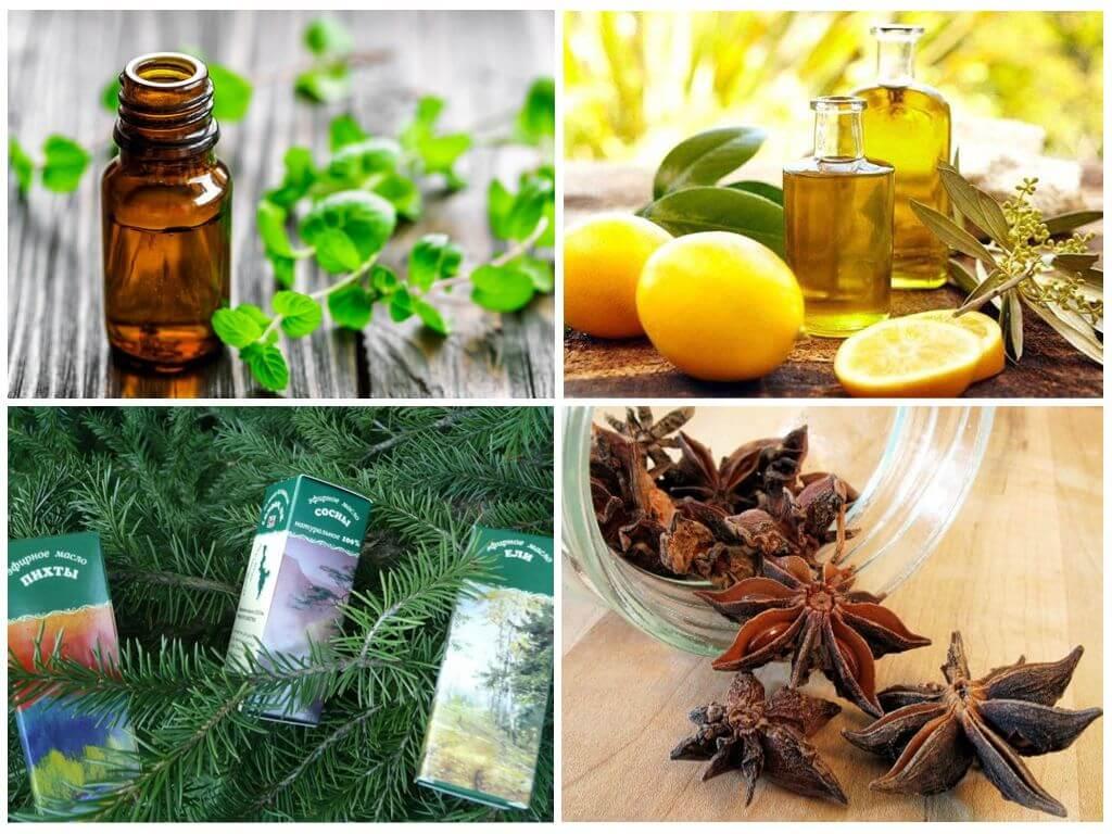 Что не любят тараканы: запахи (уксус, пижма, мята, чайное масло) и температура