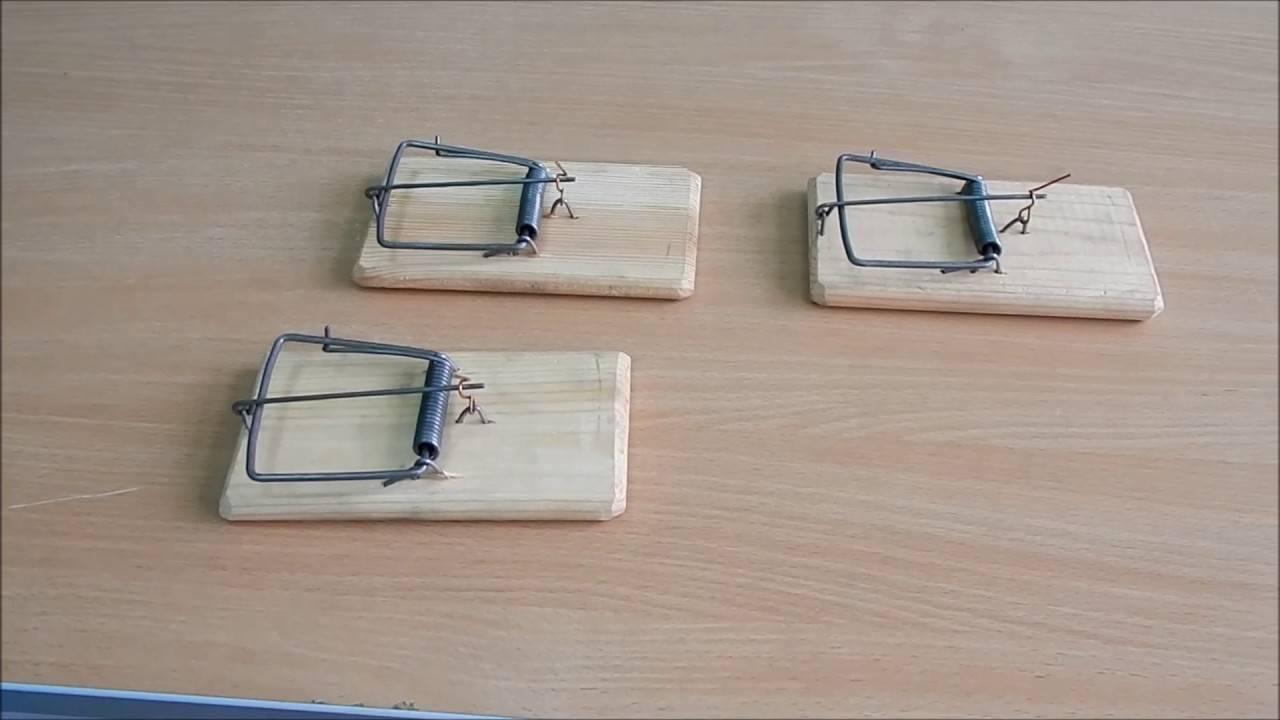 Как сделать мышеловку своими руками