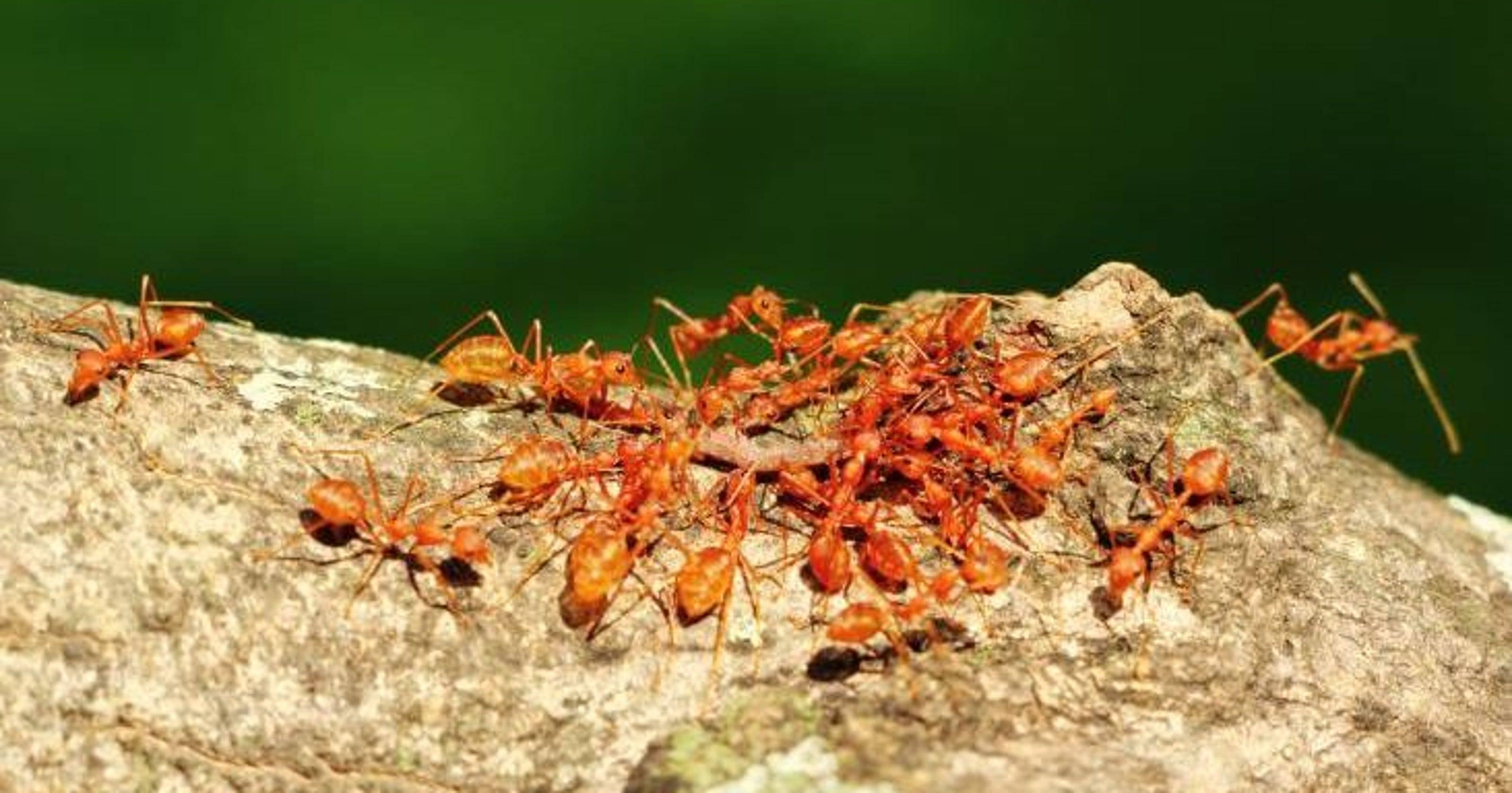 Сонник о муравейнике: значение сна