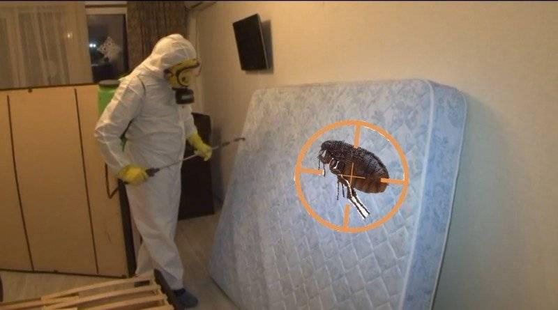 Способы избавления от земляных блох в доме